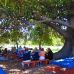 2013 Rhodes picnic 5